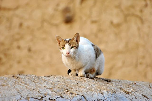 bílá kočka na stromě